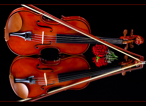 Reflections on a Violin - Photos By Orion