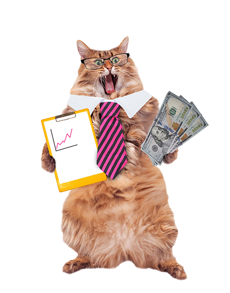 Business cat excited about his numbers and profits