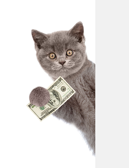 kitty bringing you the money